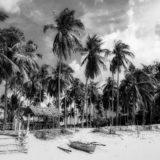 フィリピンのビーチとヤシの木